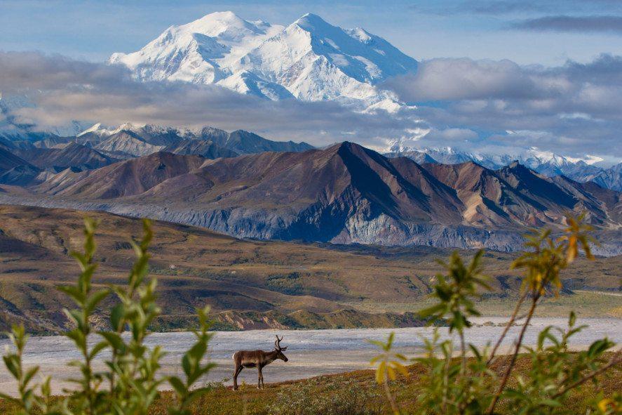 Alaska Rail Tours Fairbanks